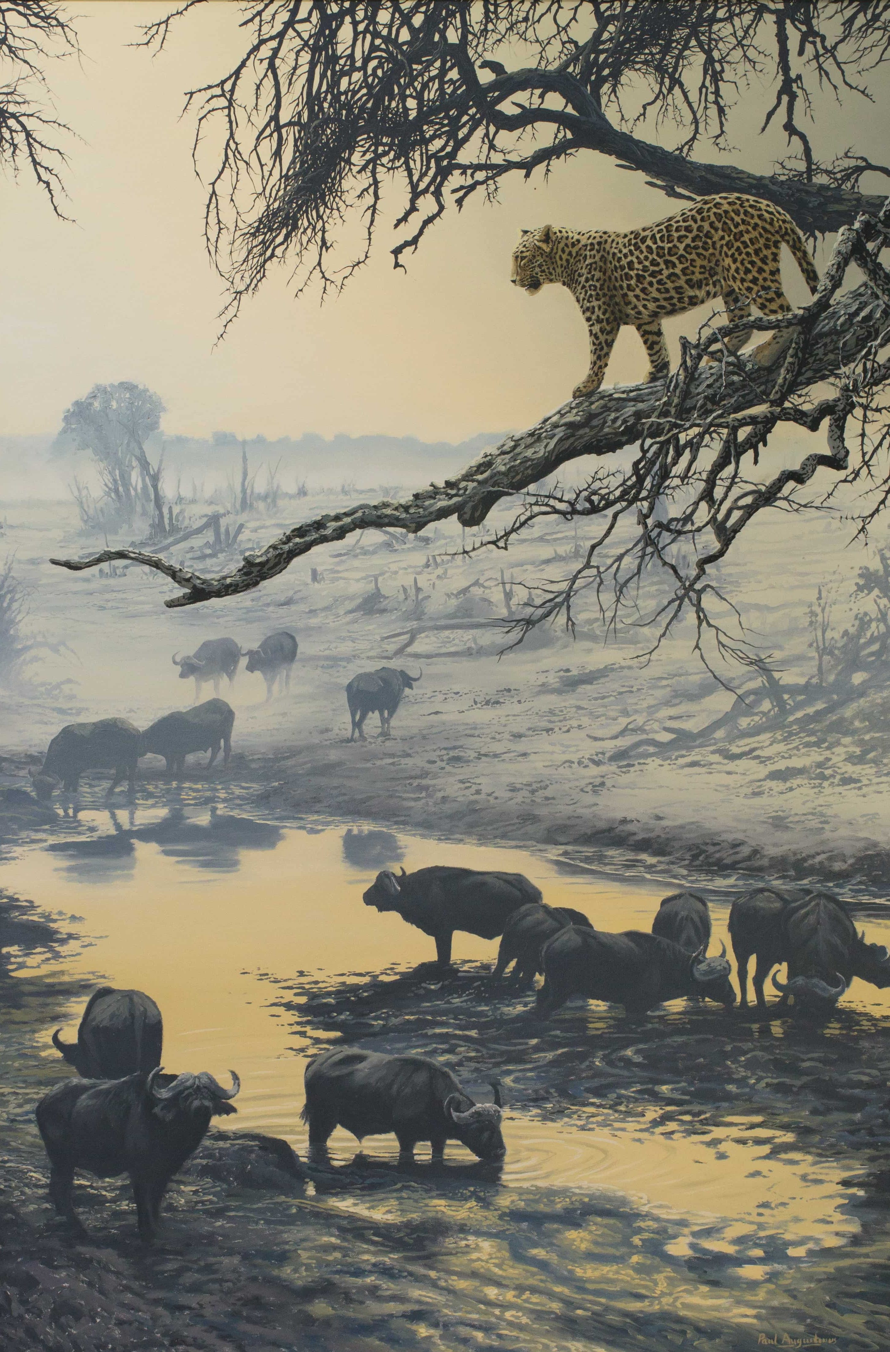 Leopard on Buffalo - 48x32
